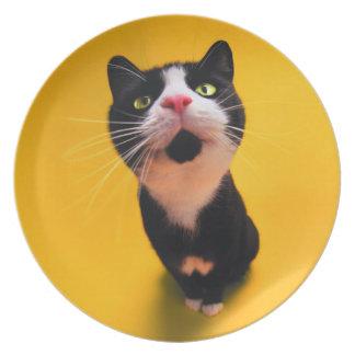 Black and white cat-tuxedo cat-pet kitten-pet cat plate
