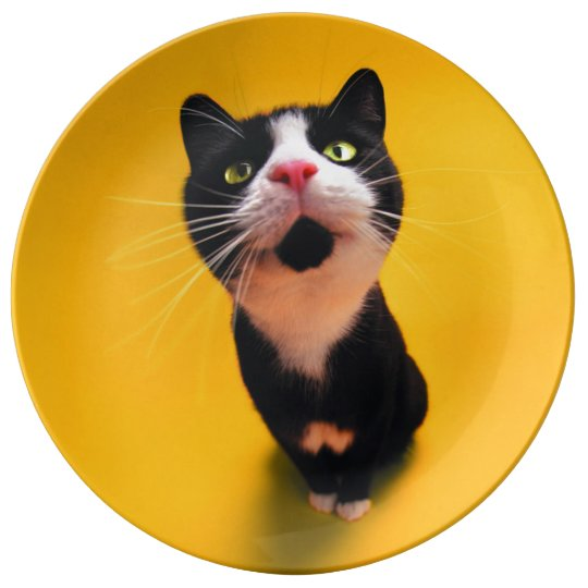 Black and white cat-tuxedo cat-pet kitten-pet cat porcelain plate