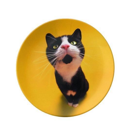 Black and white cat-tuxedo cat-pet kitten-pet cat porcelain plates