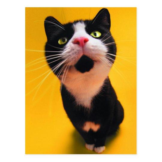 Black and white cat-tuxedo cat-pet kitten-pet cat postcard