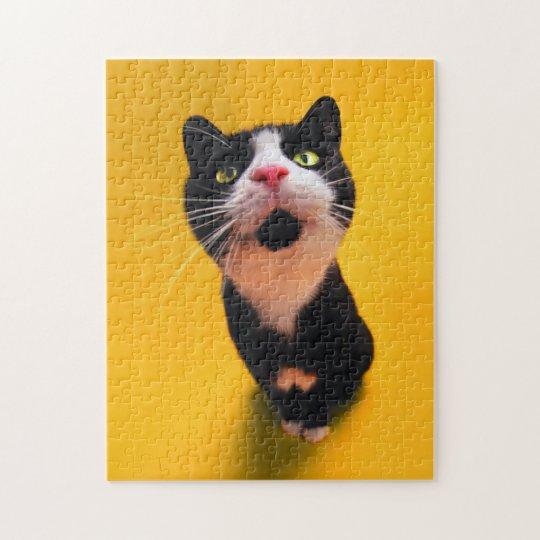 Black and white cat-tuxedo cat-pet kitten-pet cat puzzles