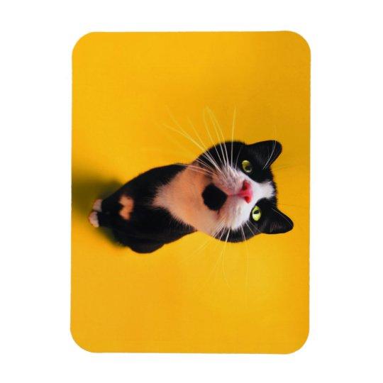 Black and white cat-tuxedo cat-pet kitten-pet cat rectangular photo magnet