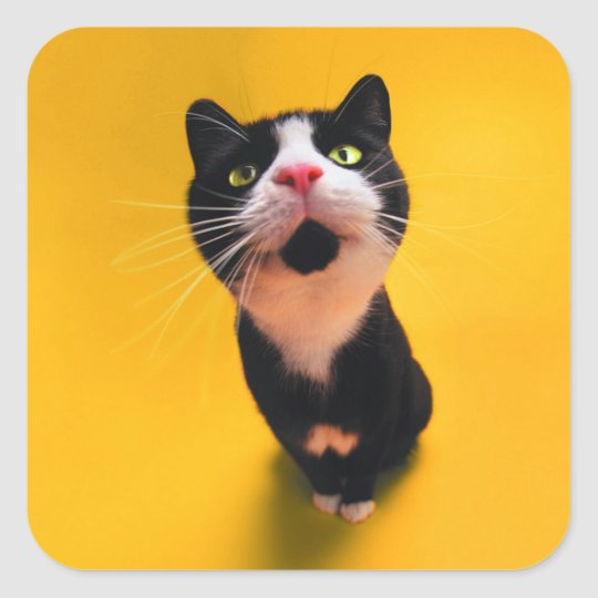 Black and white cat-tuxedo cat-pet kitten-pet cat square sticker