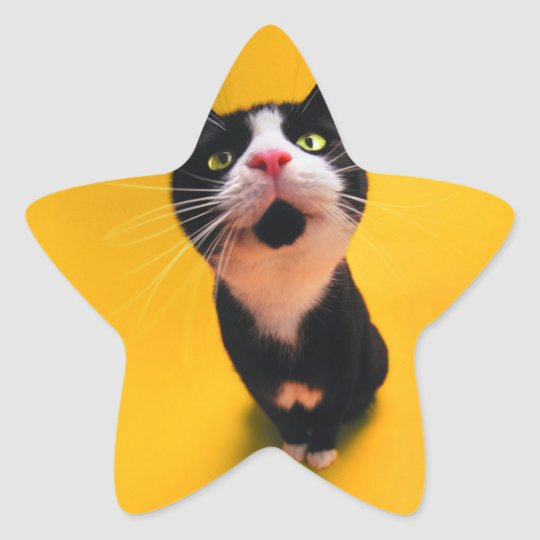 Black and white cat-tuxedo cat-pet kitten-pet cat star sticker