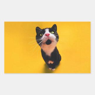 Black and white cat-tuxedo cat-pet kitten-pet cat sticker