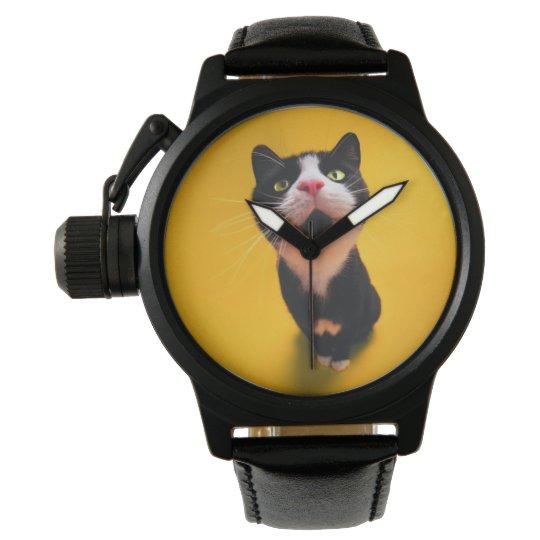 Black and white cat-tuxedo cat-pet kitten-pet cat watch
