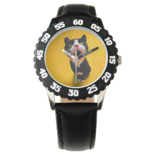 Black and white cat-tuxedo cat-pet kitten-pet cat watch