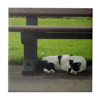 Black and White Cat Under Bench Tile