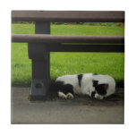 Black and White Cat Under Bench Tiles