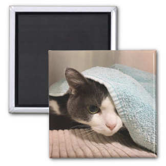 Black and White Cat Under Towel Magnet