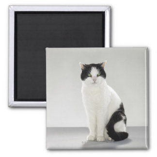 Black and white cat with glowing green eyes square magnet
