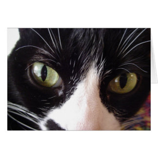 Black and White Cat with Green Eyes Note Card