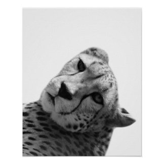 Black and white cheetah photography poster