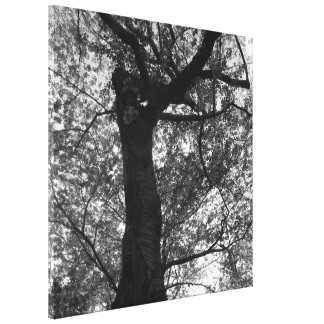 Black and White Cherry Blossom Tree Print Gallery Wrap Canvas