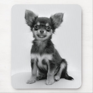 Black and White Chihuahua Puppy Photo Mouse Pad