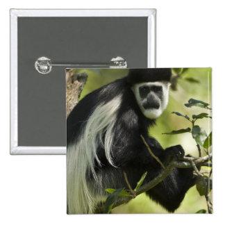 Black and White Colobus Monkey, Colobus 2 2 Inch Square Button