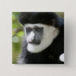 Black and White Colobus Monkey, Colobus 2 Inch Square Button
