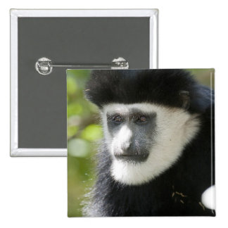 Black and White Colobus Monkey, Colobus 2 Inch Square Button