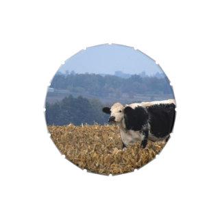 Black and White Cow grazes in freshly plowed field