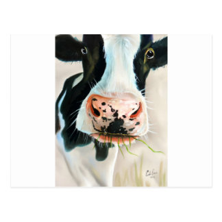Black and white cow portrait painting postcard