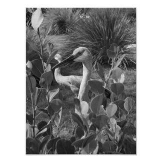 Black And White Crane Exotic Bird Photograph Poster