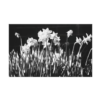 Black and White Daffodil Canvas