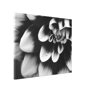 Black and White Dahlia Flower Blossom Canvas Print