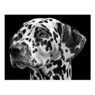 Black and White Dalmatian Dog Postcard