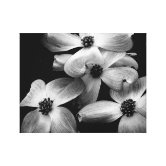 Black and White Dogwood Flower Canvas