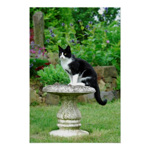 black-and-white domestic cat on garden table, poster