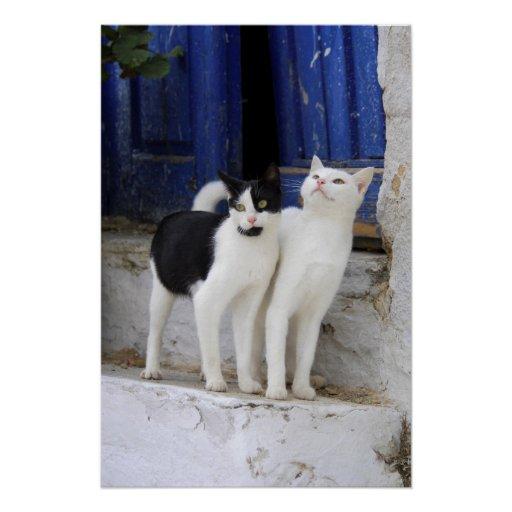 black-and-white domestic cats on stairs before doo poster