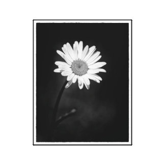Black and White Dramatic Minimalist Daisy Flower Canvas Print