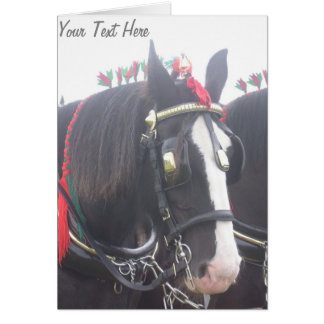 Black and white dray horse in colorful tack photo card
