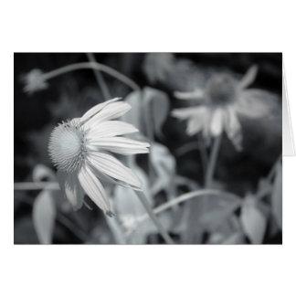 Black and White Echinacaea Card