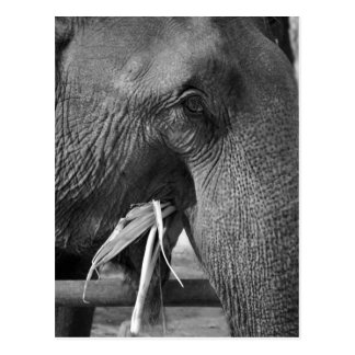 Black and white elephant photo postcard