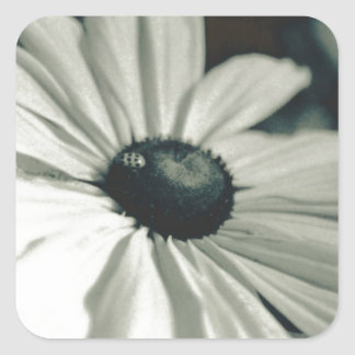 Black and White - Eyed Susan Square Sticker