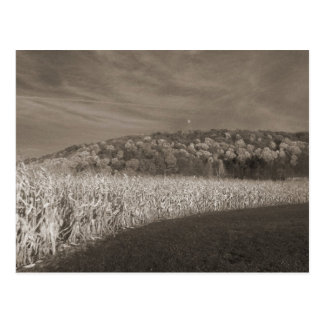 Black and White Fields Of Grain Postcard