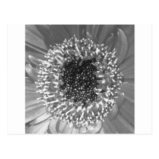Black And White Floral Photography Postcard