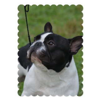 Black and White French Bulldog Card