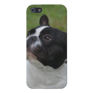 Black and White French Bulldog iPhone 5/5S Cover