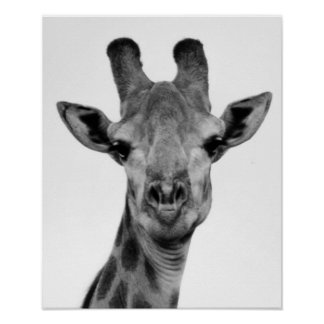 Black and White Giraffe Photograph Poster