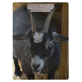black and white goat under wood structure animal clipboard