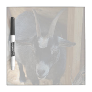black and white goat under wood structure animal Dry-Erase board