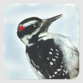 Black and White Hairy Woodpecker Stickers