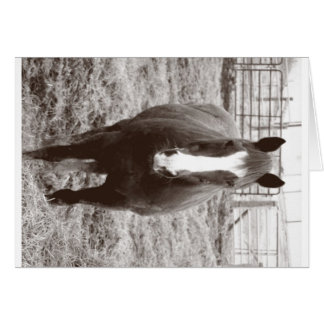 Black and white horse card