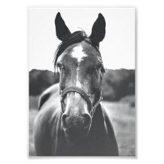 Black and White Horse Portrait Print