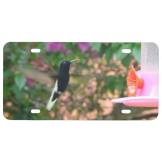 Black and White hummingbird flying at a feeder License Plate
