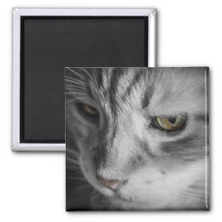 Black and White Image of Cat Magnet