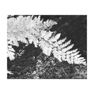 Black and white Japanese fern on log Canvas Print