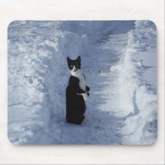 Black and white Kitten Cat in the snow Mouse Pad